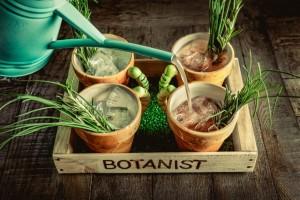 Botanist Birmingham Cocktails 3