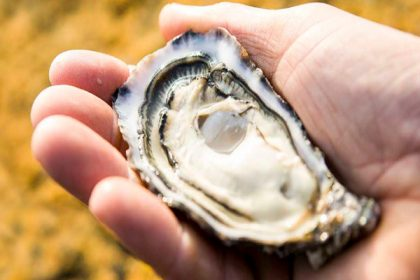 Opus Restaurant Carlingford rock oysters offer!