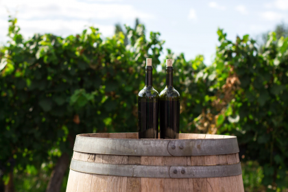 Planning To Make Your Own Wine? Here Are The Things You Need To Get First
