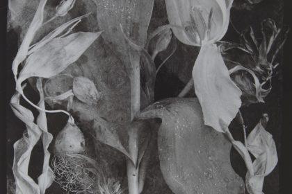 Tulipomania John Blakemore Exhibition Argentea Gallery 15th July – 28th August 2021